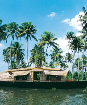 Palm Lined View – Kerala